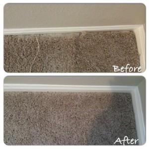 Cat Scratching Carpet Repair Houston