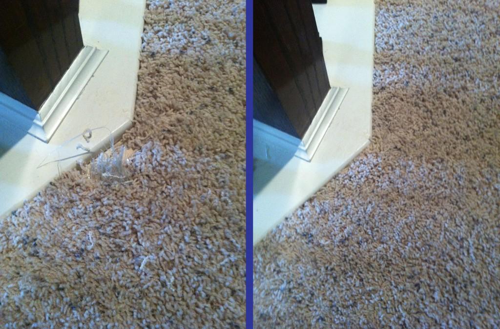Pet Damage Carpet Repair Katy Carpet Repair Houston